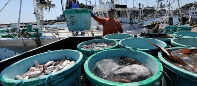 Bon appétit pour le poisson radioactif