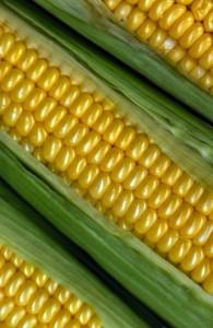 maïs-varbak.nb18255