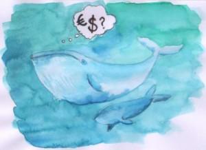 baleine 003