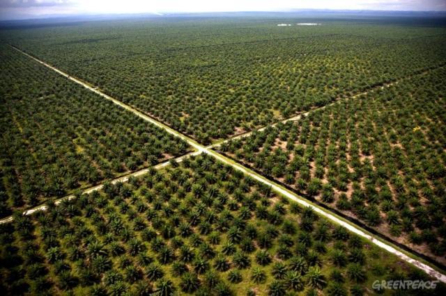 palmiers à huile Greenpeace
