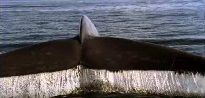 humpback; musique